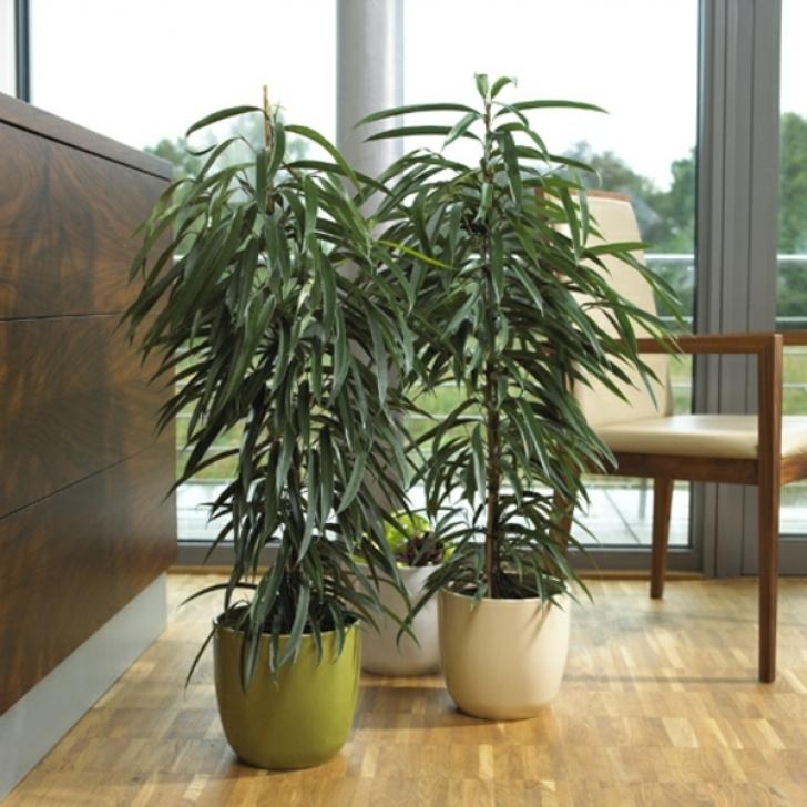 Das Perfekte Ambiente Im Haus Zimmerpflanzen Bild