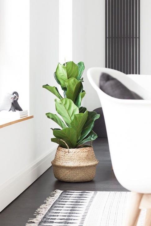 Grünes Wohnzimmer Zimmerpflanzen Foto