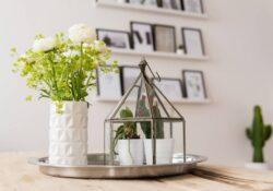 Dekorieren Sie Ihr Zuhause mit Zimmerpflanzen