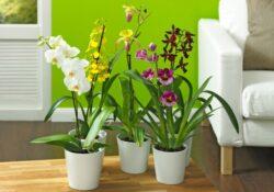 Verschönern Sie Ihr Zuhause mit Zimmerpflanzen
