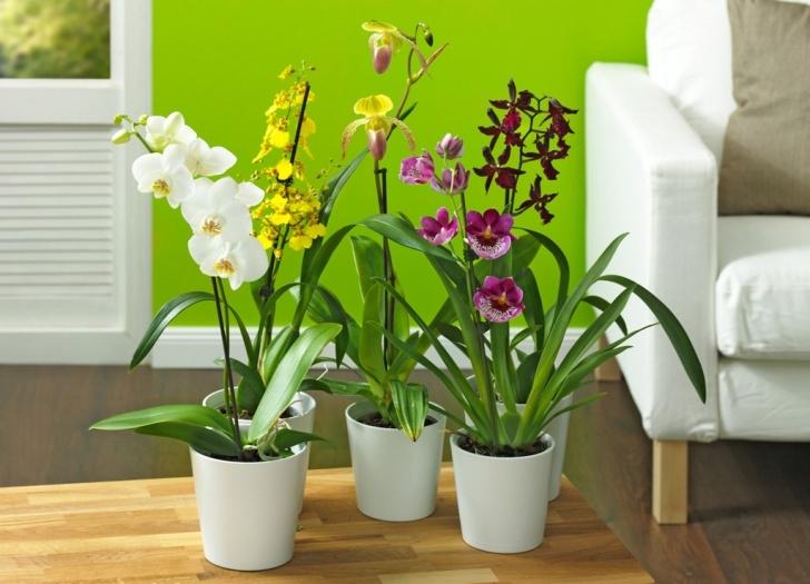 Schön Zimmerpflanzen Foto